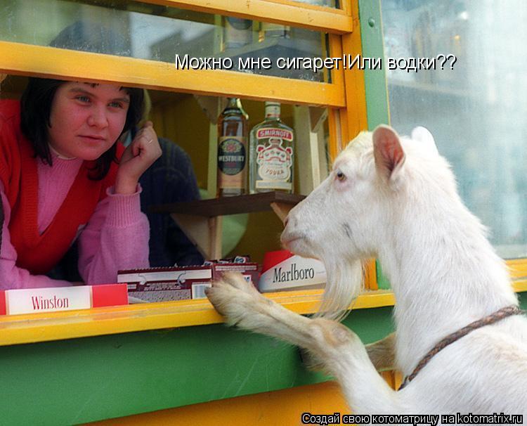 Котоматрица: Можно мне сигарет!Или водки??