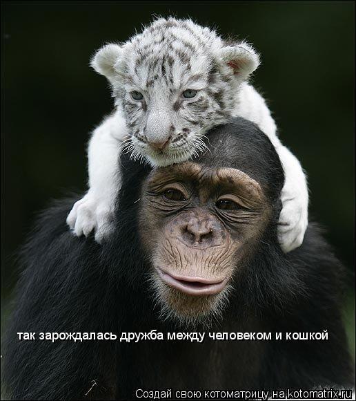 Котоматрица: так зарождалась дружба между человеком и кошкой