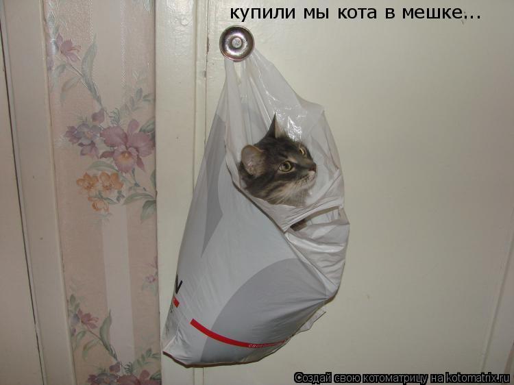 Котоматрица: купили мы кота в мешке...