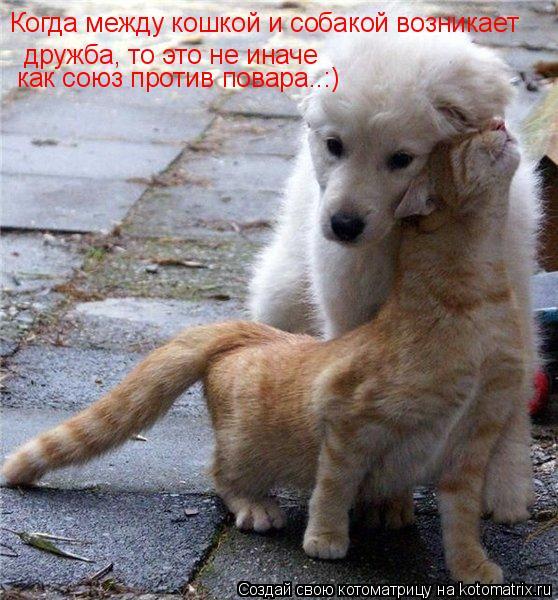 Котоматрица: дружба, то это не иначе как союз против повара..:) Когда между кошкой и собакой возникает