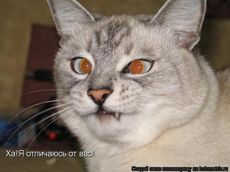 Котоматрица: Ха!Я отличаюсь от вас!