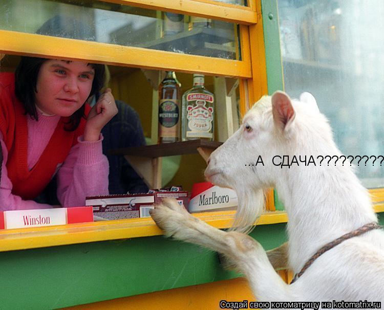Котоматрица: ...А  СДАЧА??????????