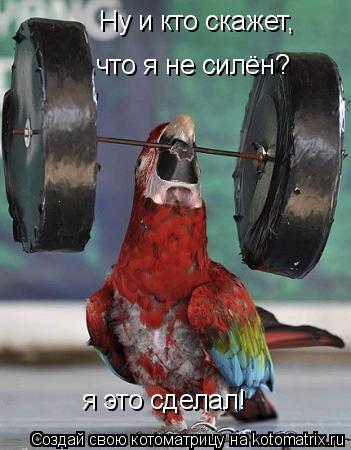Котоматрица: я это сделал! Ну и кто скажет, что я не силён?