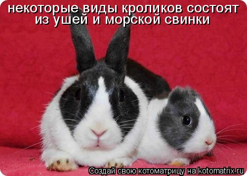 Котоматрица: некоторые виды кроликов состоят  из ушей и морской свинки