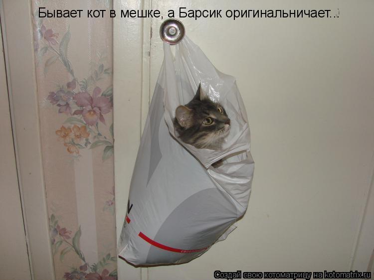 Котоматрица: Бывает кот в мешке, а Барсик оригинальничает...