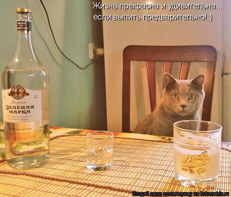 Котоматрица: Жизнь прекрасна и удивительна... если выпить предварительно!:)