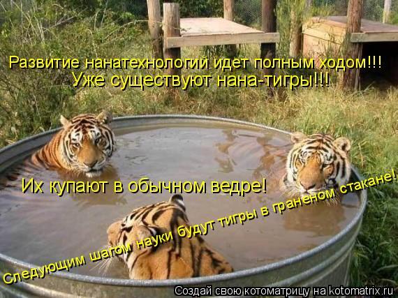 Котоматрица: Уже существуют нана-тигры!!! Их купают в обычном ведре! Следущим шагом науки будут тигры в граненом стакане! Следующим шагом науки будут тиг