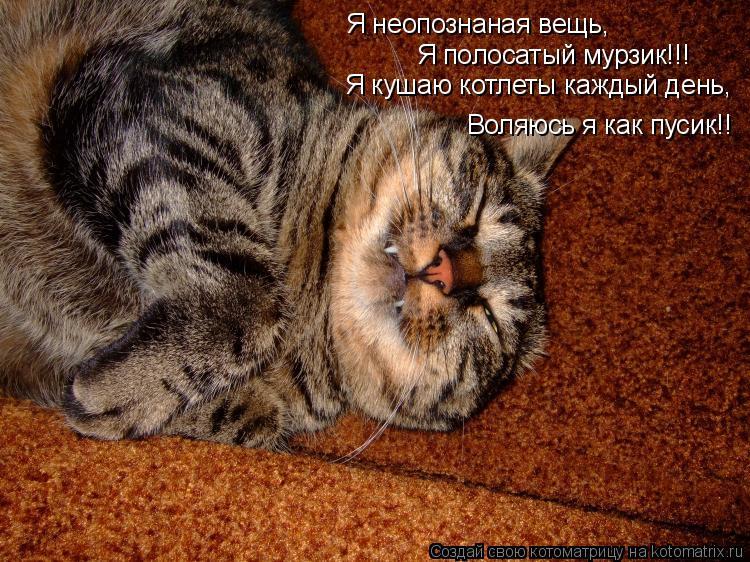 Котоматрица: Я неопознаная вещь, Я полосатый мурзик!!! Я кушаю котлеты каждый день, Воляюсь я как пусик!!