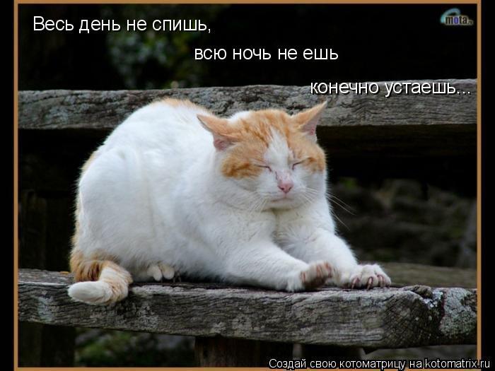 Котоматрица: Весь день не спишь, Весь день не спишь, всю ночь не ешь конечно устаешь...