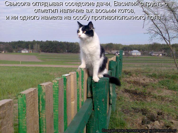 Котоматрица: Свысока оглядывая соседские дачи, Василий с грустью отметил наличие аж восьми котов, и ни одного намека на особу противоположного пола.