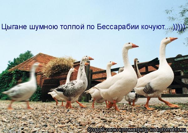 Котоматрица: Цыгане шумною толпой по Бессарабии кочуют....)))))