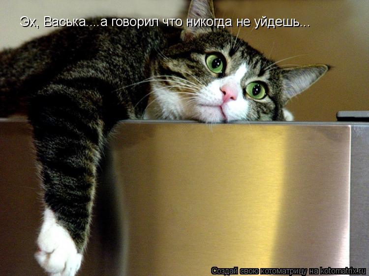 Котоматрица: Эх, Васька....а говорил что никогда не уйдешь...