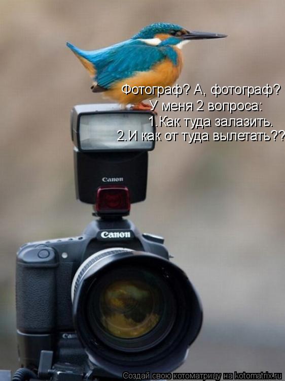 Котоматрица: Фотограф? А, фотограф?   У меня 2 вопроса: 1.Как туда залазить. 2.И как от туда вылетать???