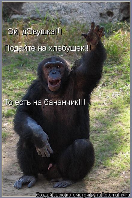 Котоматрица: Эй, дЭвушка!!! Подайте на хлебушек!!! То есть на бананчик!!!