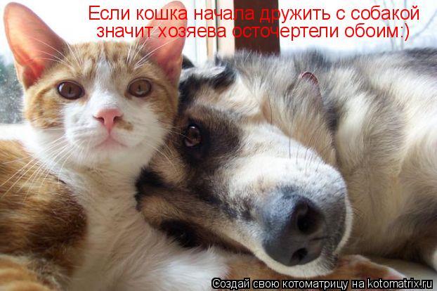 Котоматрица: Если кошка начала дружить с собакой значит хозяева осточертели обоим:)