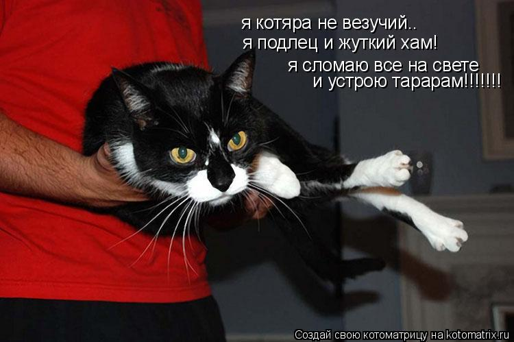 Котоматрица: я котяра не везучий.. я подлец и жуткий хам! я сломаю все на свете  и устрою тарарам!!!!!!!