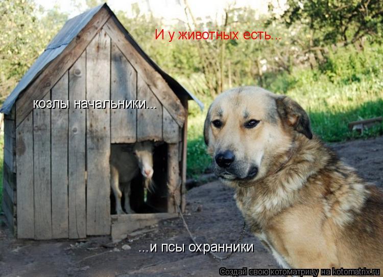 Котоматрица: ...и псы охранники И у животных есть... козлы начальники...