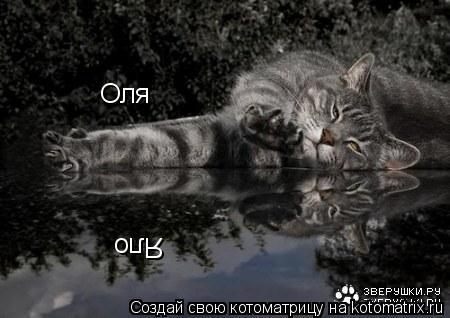 Котоматрица: Оля Яло