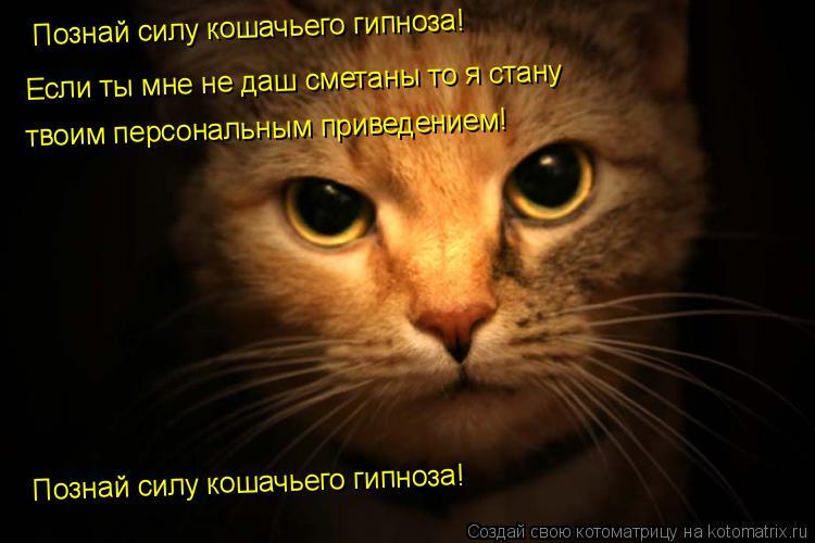 Котоматрица: Познай силу кошачьего гипноза! Если ты мне не даш сметаны то я стану твоим персональным приведением! Познай силу кошачьего гипноза!