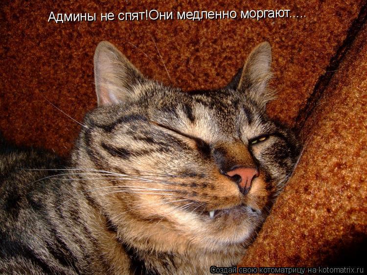 Котоматрица: Админы не спят!Они медленно моргают.....