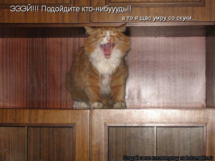 Котоматрица: ЭЭЭЙ!!! Подойдите кто-нибууудь!! а то я щас умру со скуки...