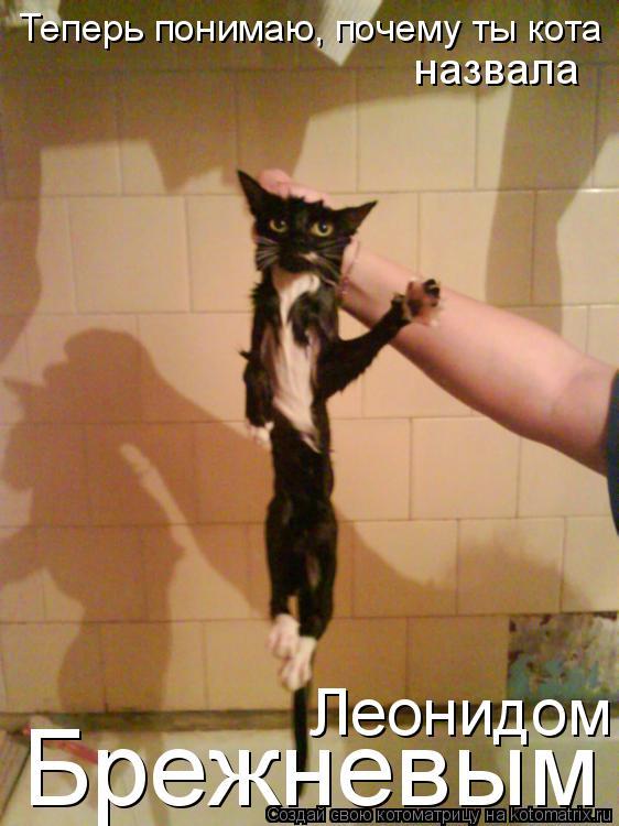 Котоматрица: Теперь понимаю, почему ты кота Брежневым назвала Леонидом