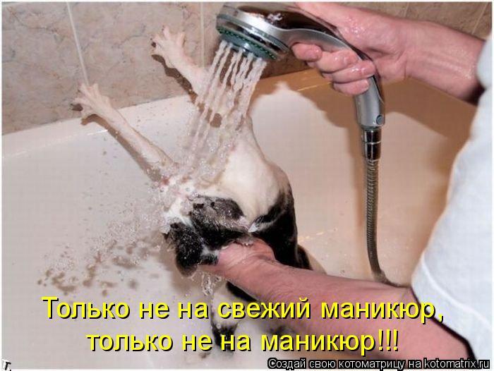 Котоматрица: Только не на свежий маникюр,  только не на маникюр!!!