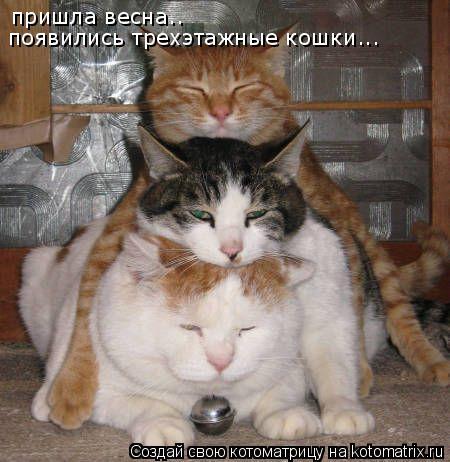 Котоматрица: пришла весна.. появились трехэтажные кошки...