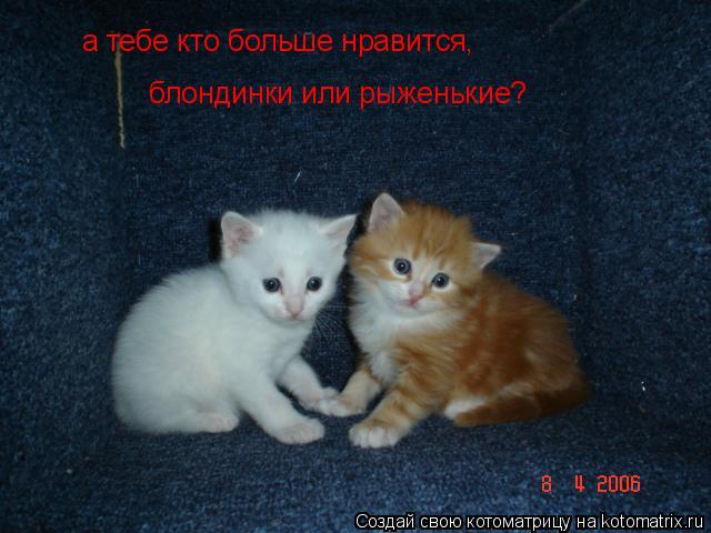 Котоматрица: а тебе кто больше нравится, блондинки или рыженькие?
