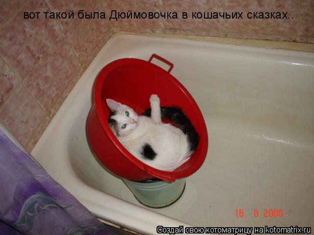 Котоматрица: вот такой была Дюймовочка в кошачьих сказках..