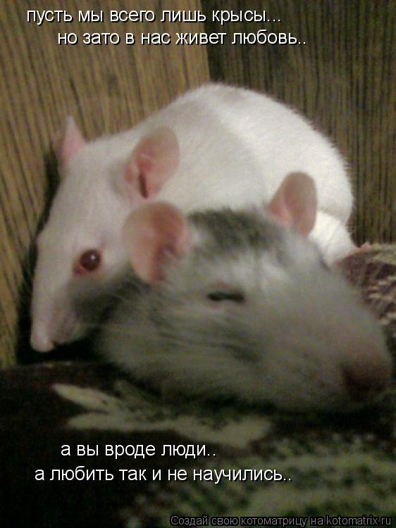 Котоматрица: пусть мы всего лишь крысы... но зато в нас живет любовь.. а вы вроде люди.. а любить так и не научились..