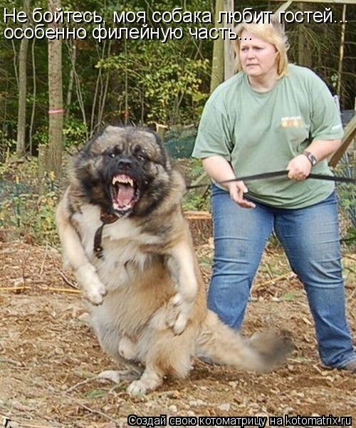 Котоматрица: Не бойтесь, моя собака любит гостей... особенно филейную часть...
