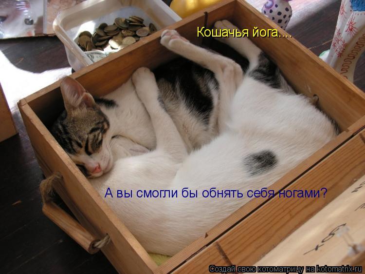 Котоматрица: Кошачья йога.... Кошачья йога.... А вы смогли бы обнять себя ногами?