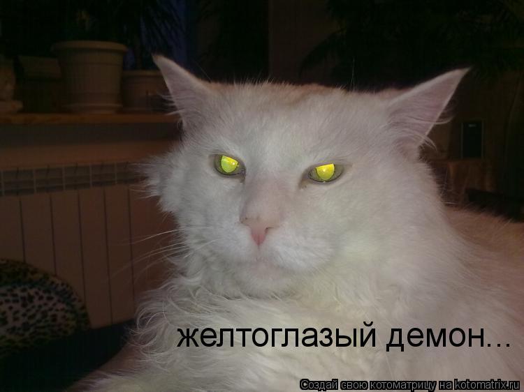 Котоматрица: желтоглазый демон...