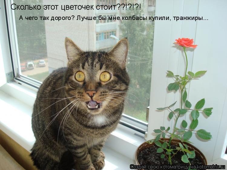 Котоматрица: Сколько этот цветочек стоит??!?!?! А чего так дорого? Лучше бы мне колбасы купили, транжиры...