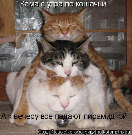Котоматрица: Кама с утра по кошачьи  А к вечеру все падают пирамидкой