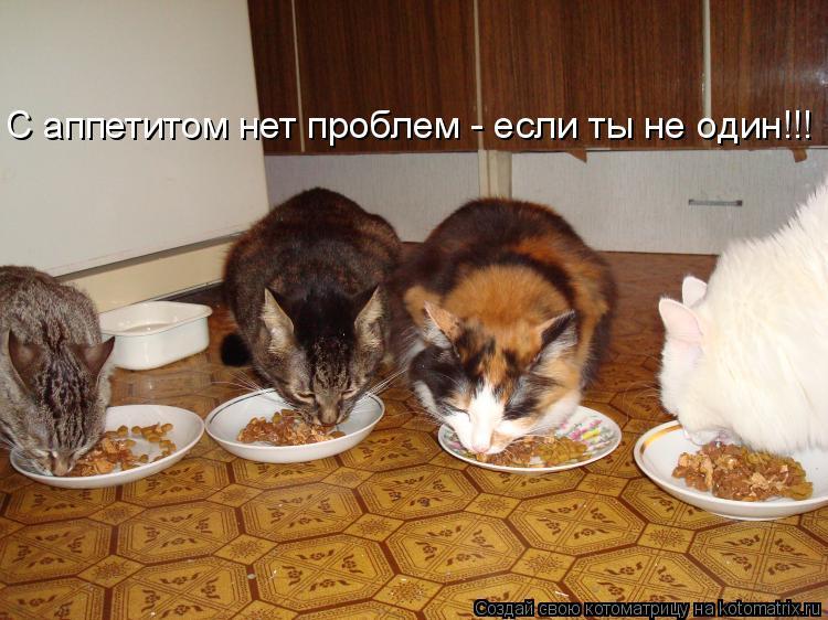 Котоматрица: С аппетитом нет проблем - если ты не один!!!