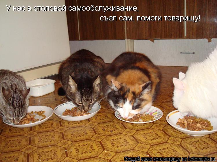 Котоматрица: У нас в столовой самообслуживание, съел сам, помоги товарищу!