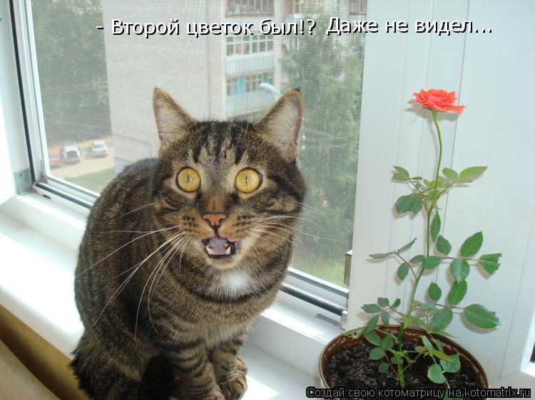 Котоматрица: - Второй цветок был!? Даже не видел...