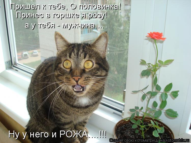 Котоматрица: Принес в горшке я розу! а у тебя - мужчина.... Ну у него и РОЖА....!!! Пришел к тебе, О половинка!