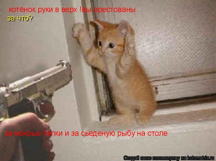 Котоматрица: котёнок руки в верх !вы арестованы за что? за мокрые тапки и за сьеденую рыбу на столе