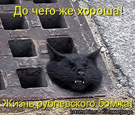Котоматрица: До чего же хороша!  Жизнь рублевского бомжа!