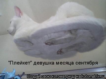 """Котоматрица: """"Плейкет"""" девушка месяца сентября"""