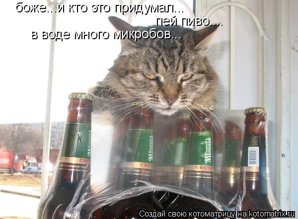 Котоматрица: боже...и кто это придумал... пей пиво.... в воде много микробов...