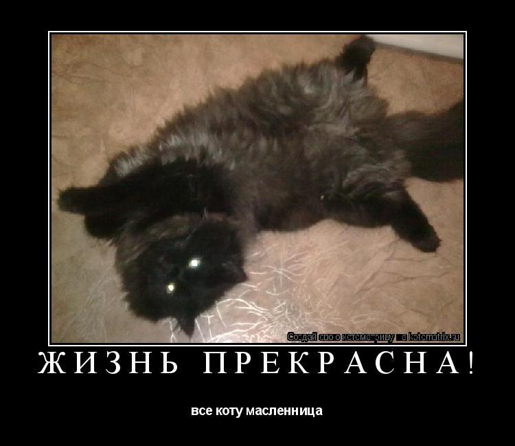 Котоматрица: ЖИЗНЬ ПРЕКРАСНА! все коту масленница