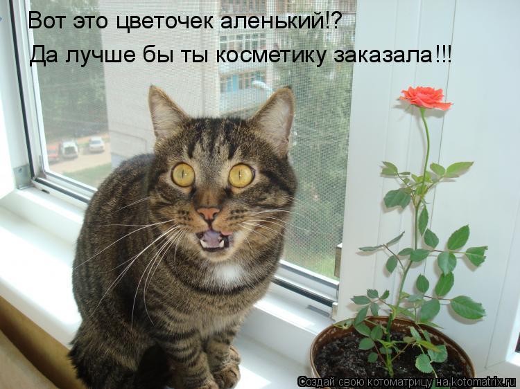 Котоматрица: Вот это цветочек аленький!? Да лучше бы ты косметику заказала!!!