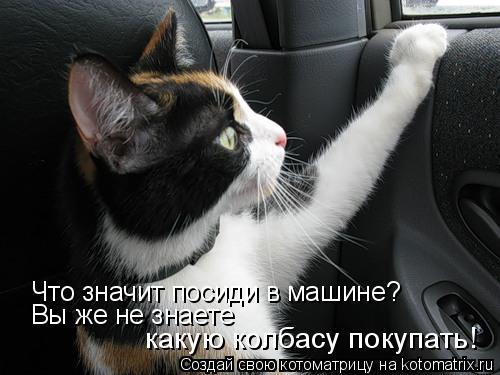 Котоматрица: Что значит посиди в машине? Вы же не знаете  какую колбасу покупать!