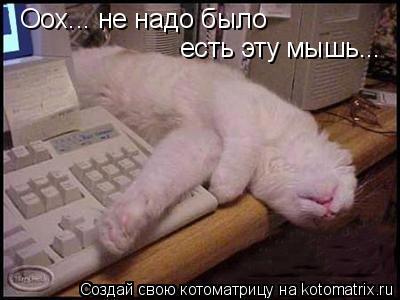 Котоматрица: Оох... не надо было есть эту мышь...