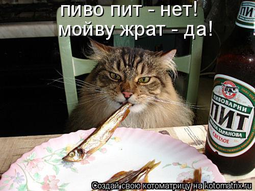 Котоматрица: пиво пит - нет! мойву жрат - да!