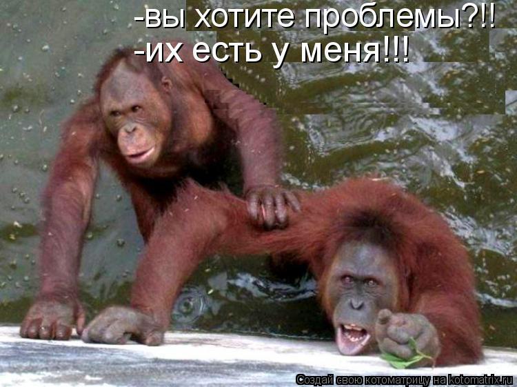 Котоматрица: -вы хотите проблемы?!! -их есть у меня!!!